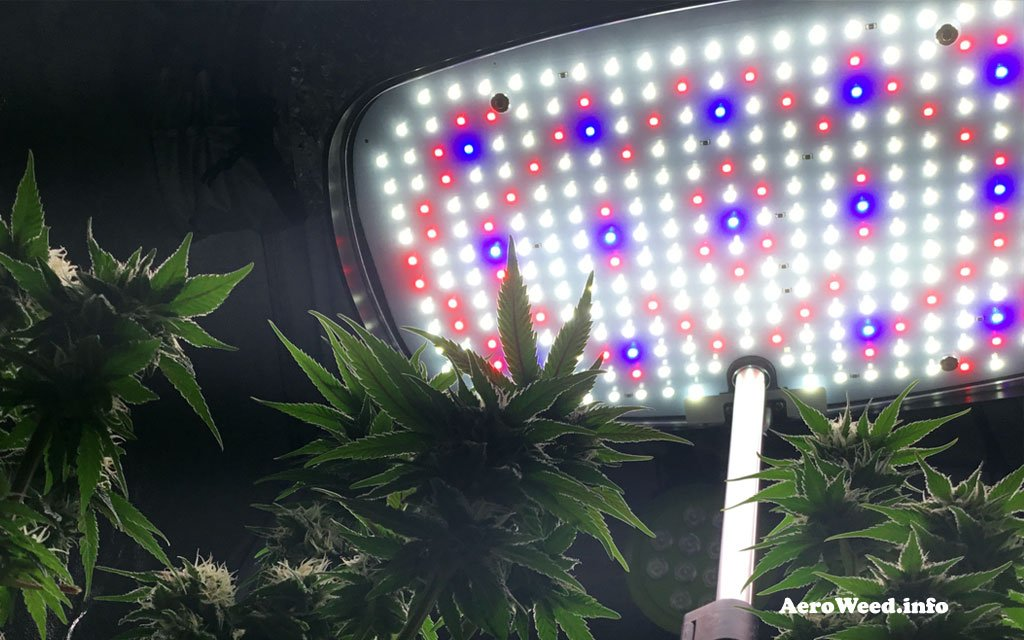 aerogarden-led-panel-and-weed