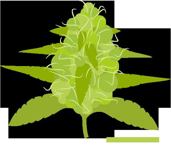 marijuana-flowering-stage-aerogarden
