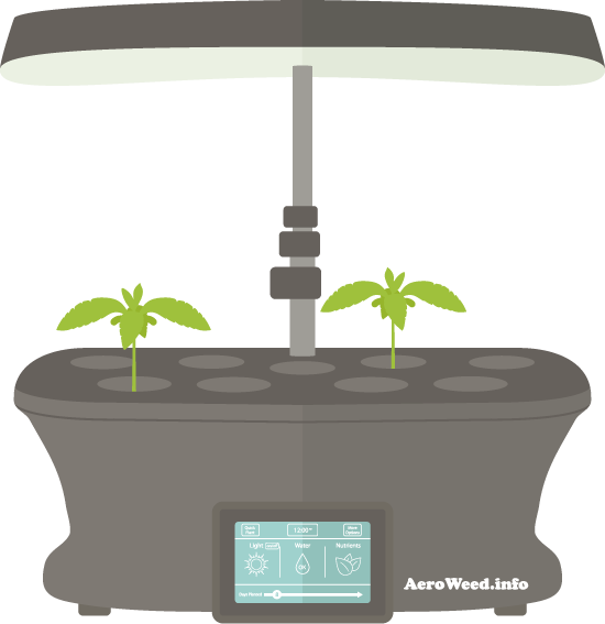 vegetative-stage-weed-aerogarden-550