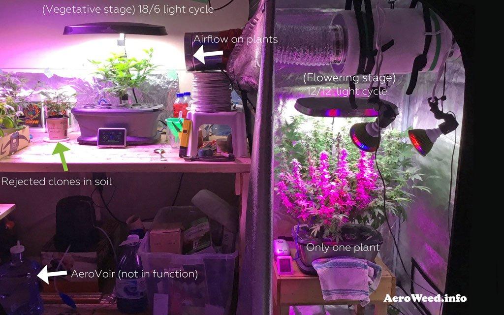 weed-aerogarden